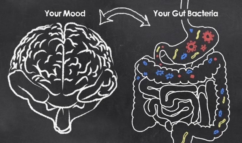 gut & brain